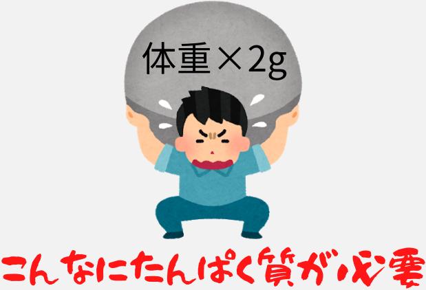 テストステロンを高めるには、体重×2gのたんぱく質が必要